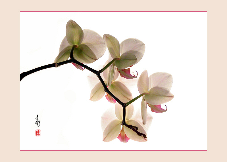 Orchidee - like a chinese painting