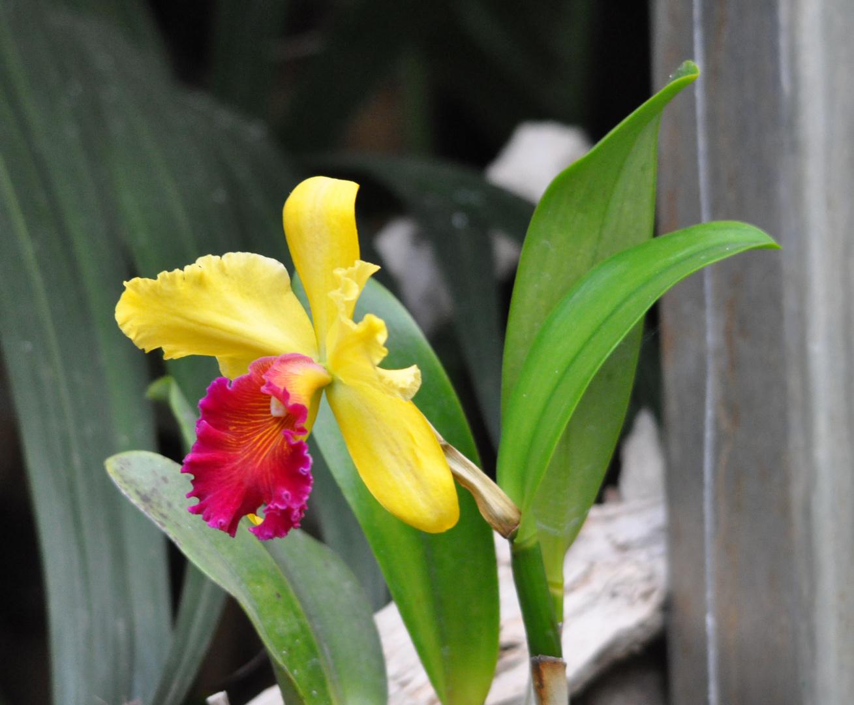 Orchidee Loro Parque Tenerife