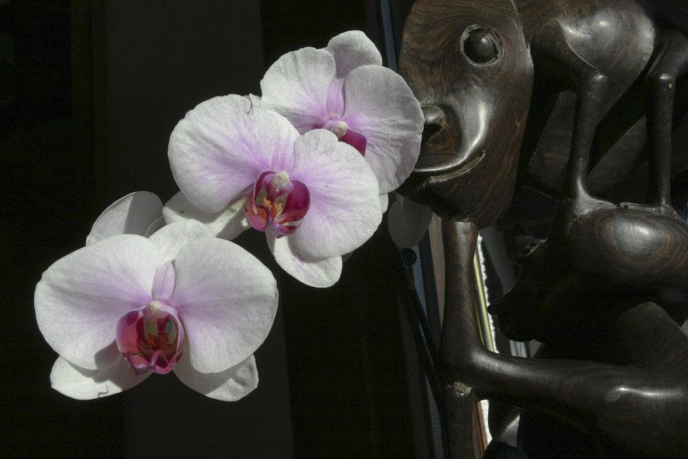 ORCHIDEE MIT MACONDE STATUE