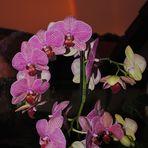 Orchidee mit Regenbogen