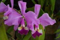 Orchidee Nr.1