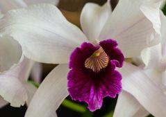 Orchidee Nr.2
