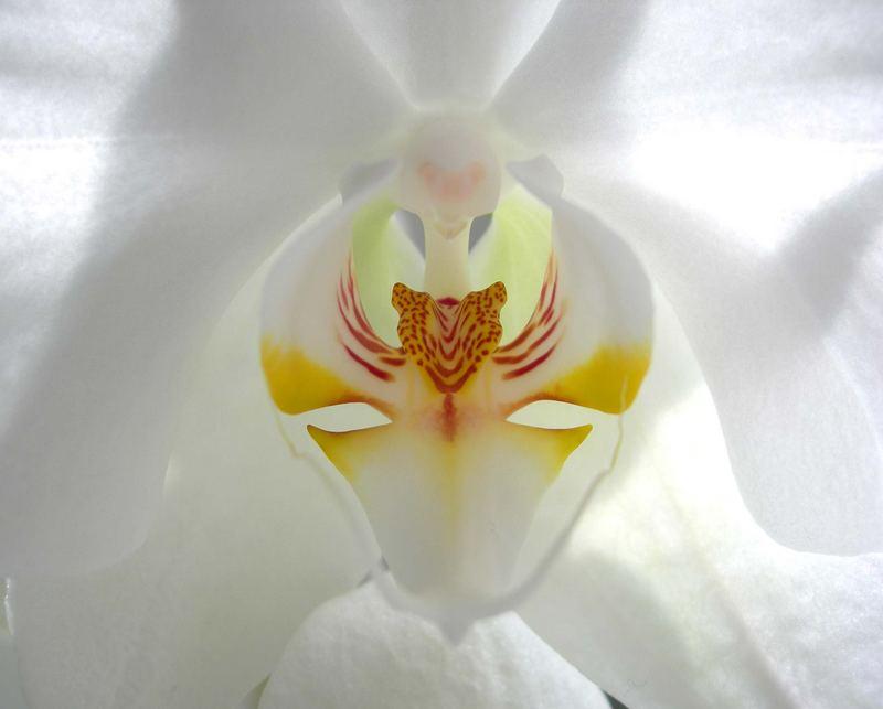 Orchidee oder Schmetterling? Das ist hier die Frage