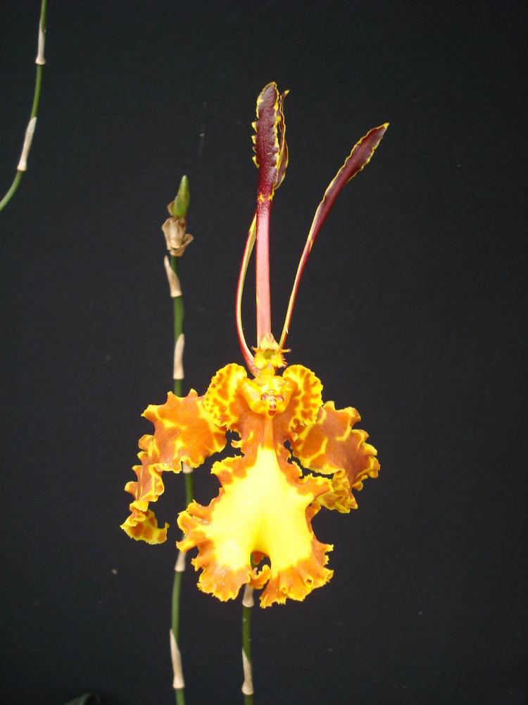Orchidée sur tableau noir