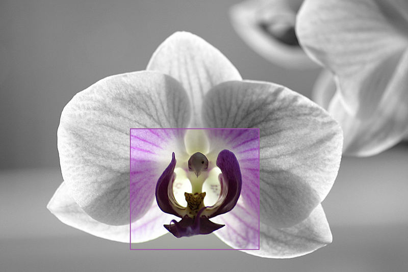 Orchidee SW mit Farbe