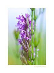 Orchidee und Schachtelhalm