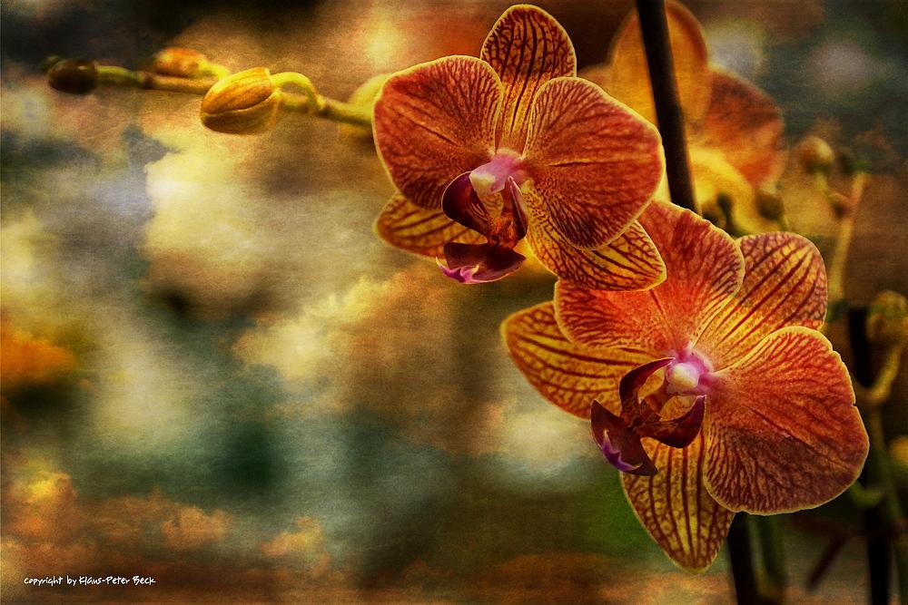 Orchidee unter dunklen Wolken