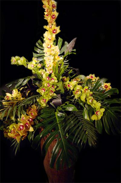 orchidee11