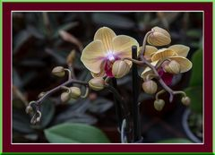 Orchidee2 in Scene gestzt