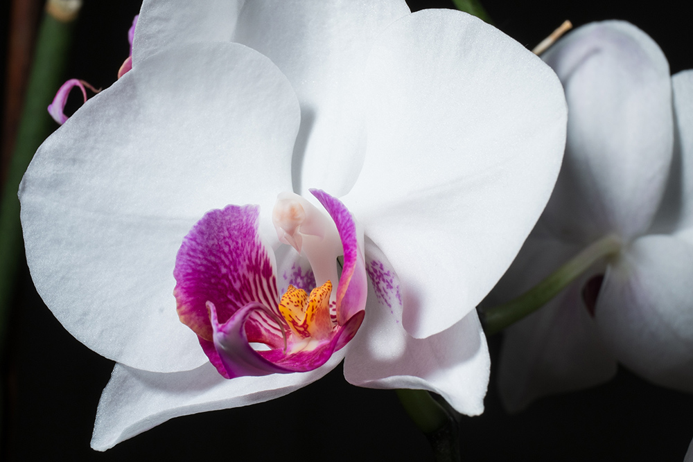 Orchidee_A6