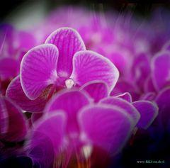 Orchidee,Foto,Fotomontage,Flower,Bildbearbeitung