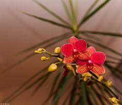 Orchideen (1)