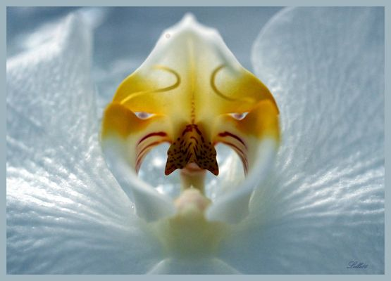 Orchideen fotos bilder auf fotocommunity orchideen altavistaventures Images