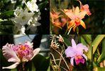 Orchideen..