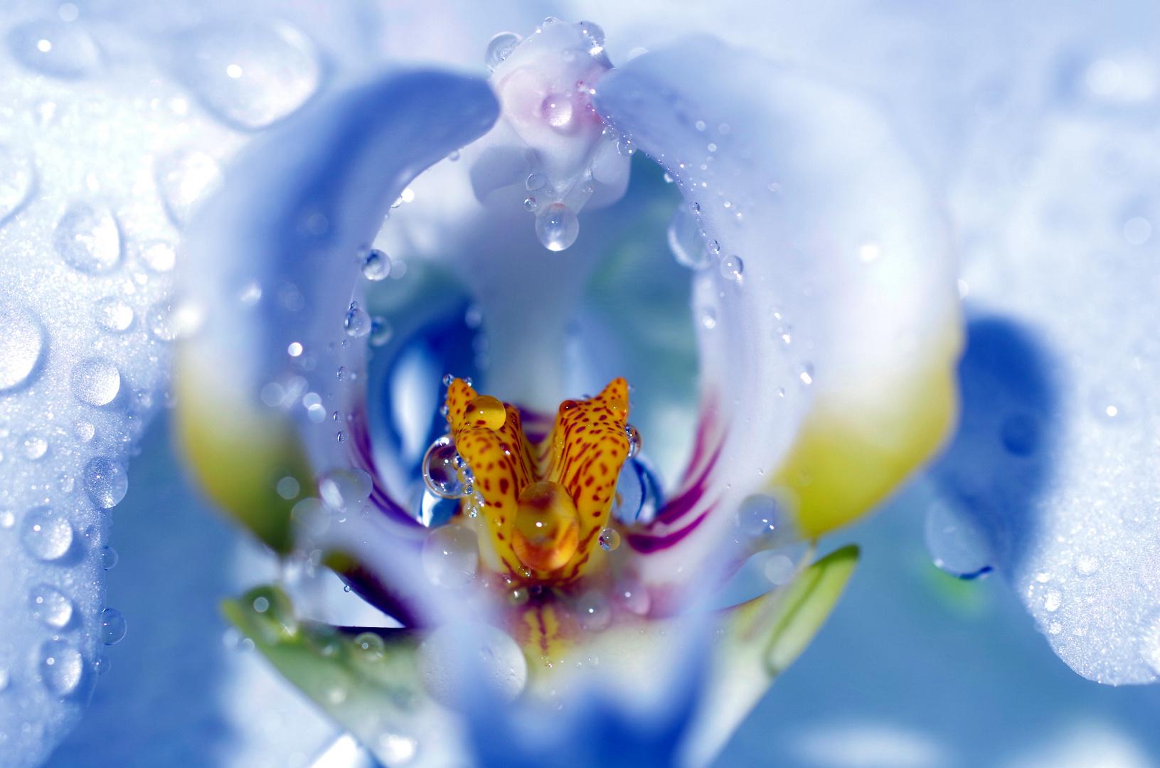 orchideen foto bild sonstiges naturkunst gestalten mit blumen bilder auf fotocommunity. Black Bedroom Furniture Sets. Home Design Ideas