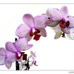 Orchideen....