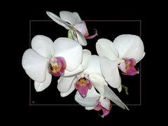 Orchideen am WE # Orquídeas para el fín de semana