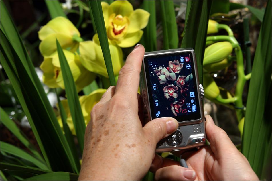 Orchideen auf dem Monitor