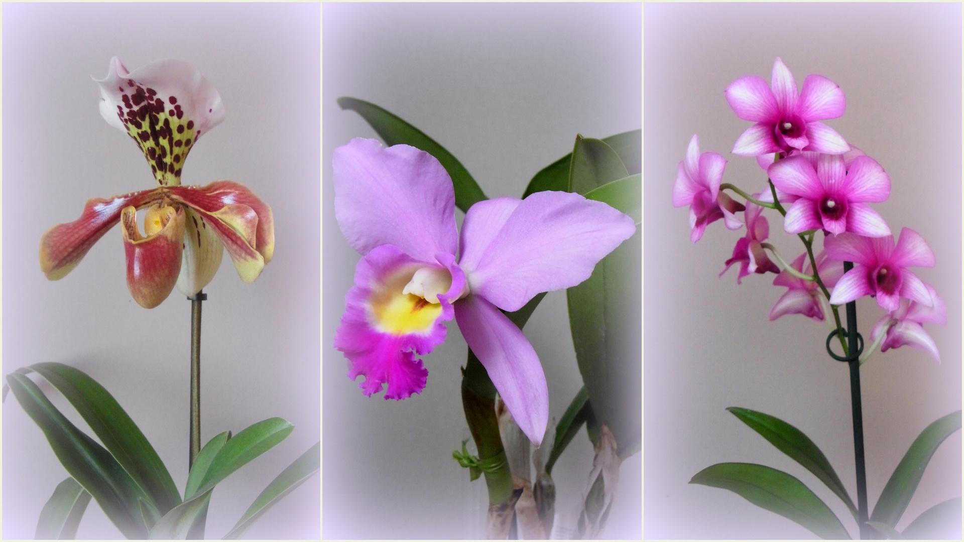 Orchideen auf unserer Fensterbank