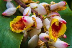 Orchideen aus der Nähe  2