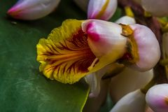 Orchideen aus der Nähe