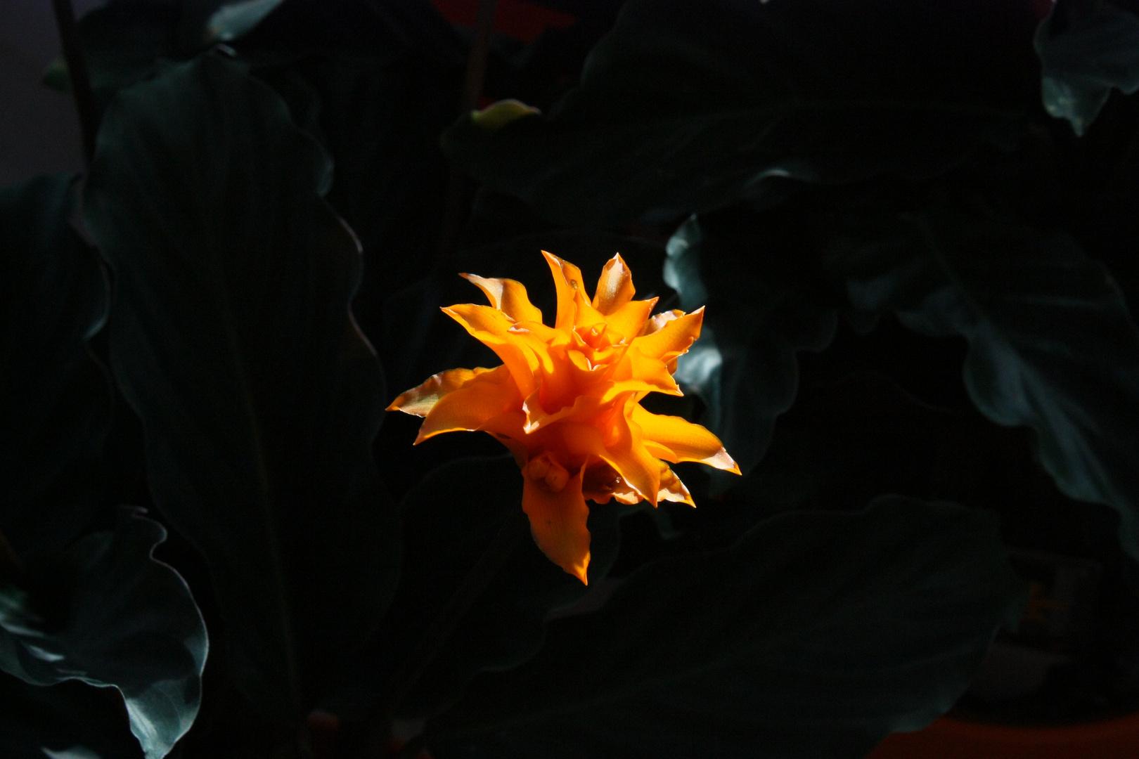 Orchideen-Ausstellung