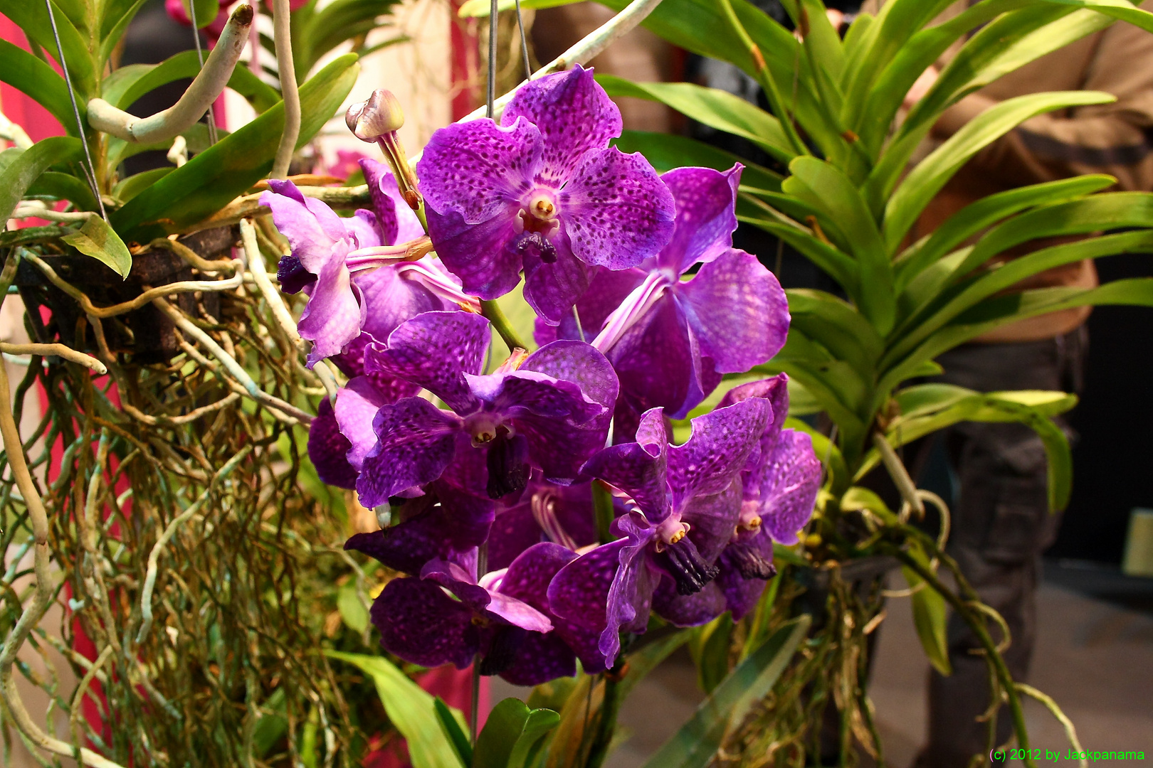 Orchideen Ausstellung Messe Haus Garten Genuss In Essen Foto Bild