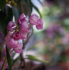 Orchideen Austellung auf der Blumeninsel Mainau