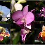 Orchideen...