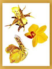Orchideen-Galerie Gelbe Blüten