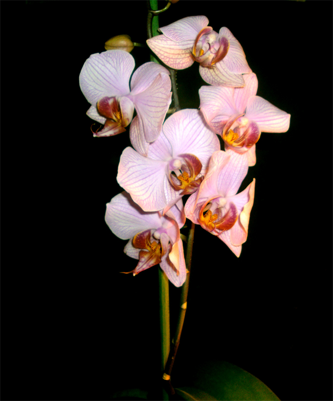 Orchideen haben schöne Farben