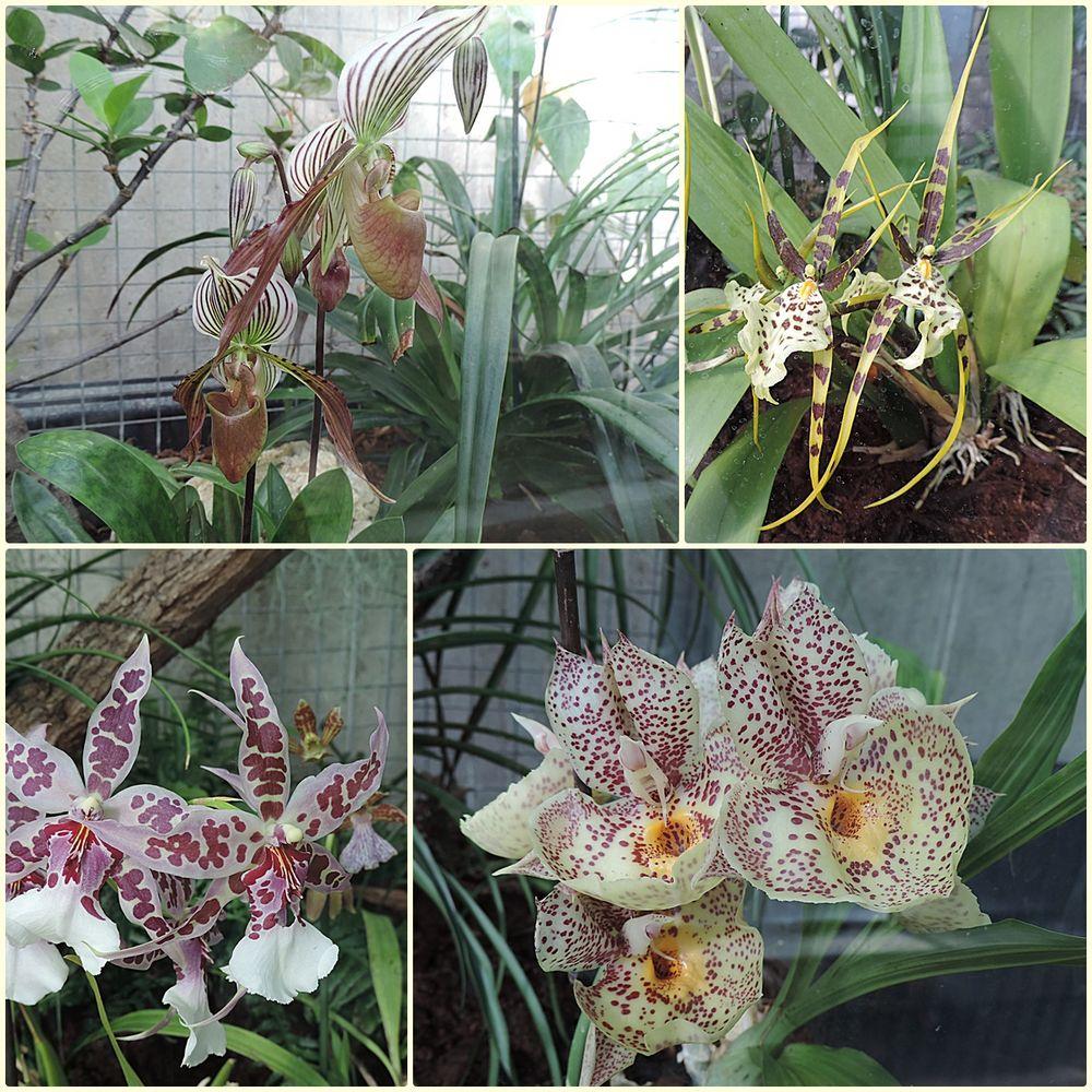 orchideen hinter glas foto bild pflanzen bl ten. Black Bedroom Furniture Sets. Home Design Ideas
