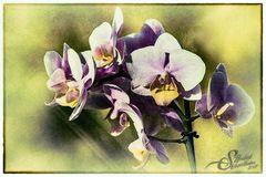 »Orchideen« II