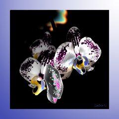 Orchideen III