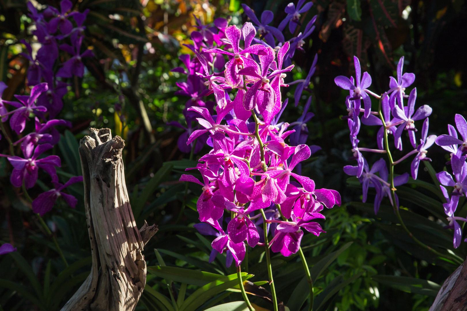 Orchideen im Abendlicht