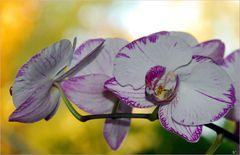 Orchideen im Herbstlicht