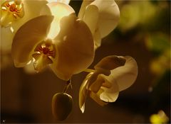 Orchideen im Kerzenlicht