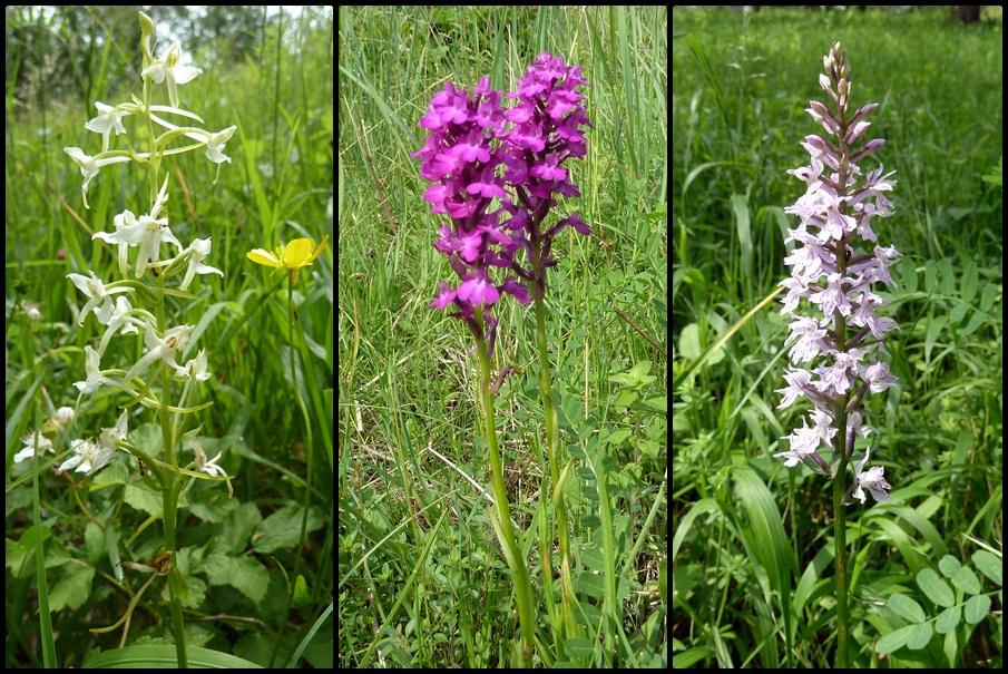 Orchideen im Lilienthal
