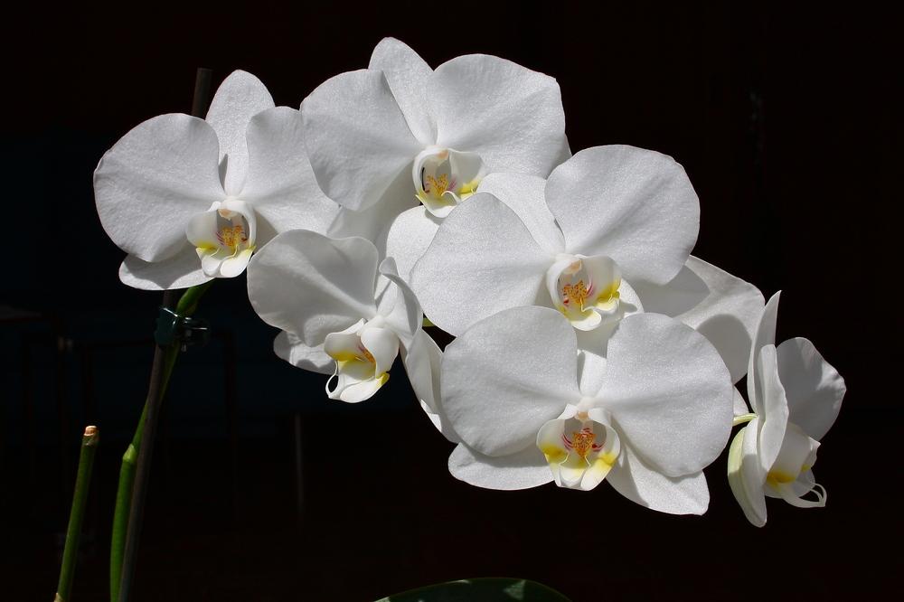Orchideen in voller Pracht