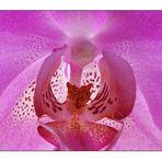 Orchideen-innenleben-großaufnahme