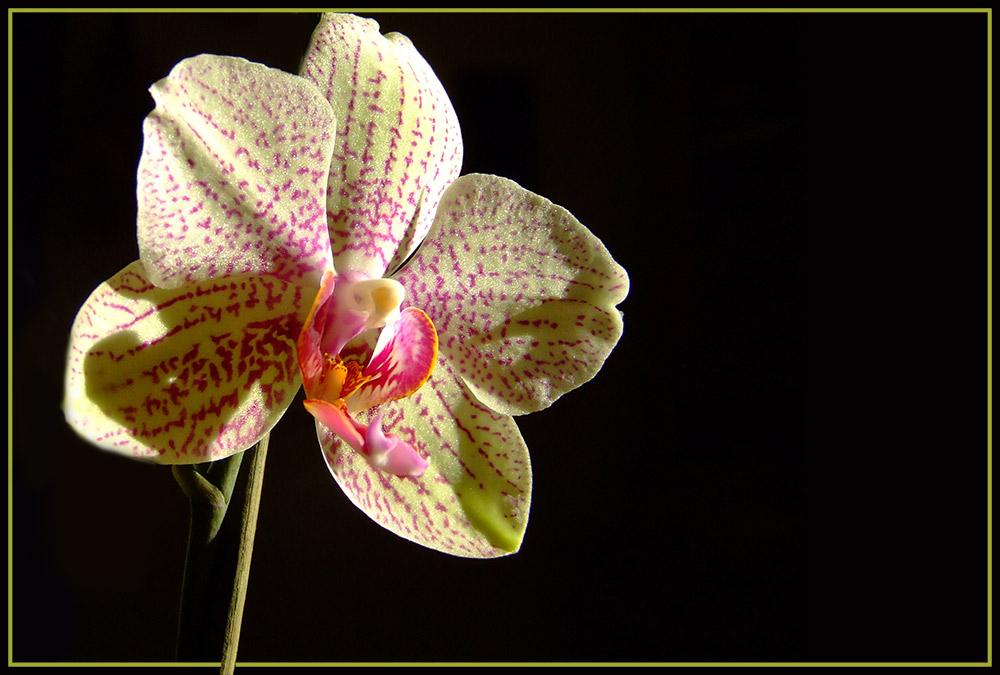 Orchideen meiner Seele