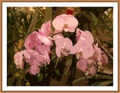 orchideen mit rahmen