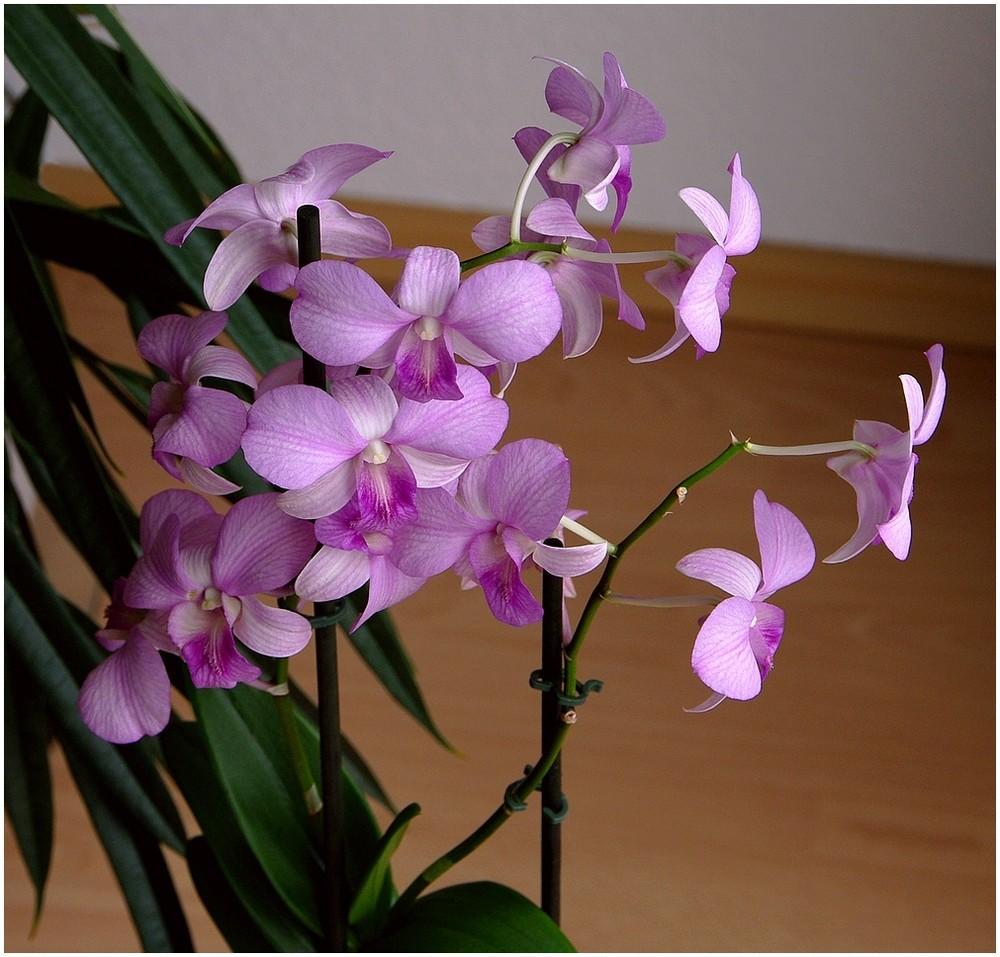 Orchideen - Test 1 - 6846