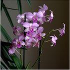 Orchideen - Test 2 - 6868