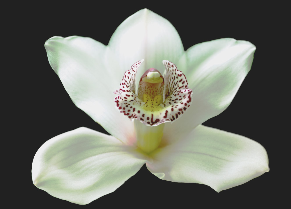 Orchideen Variationen