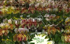 Orchideen-Verkaufsstand