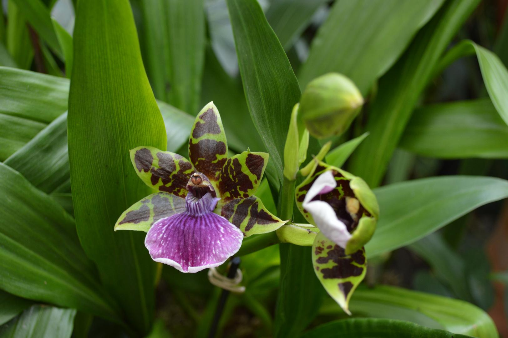 Orchideen-Zauber