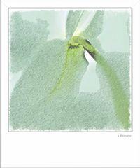 - orchideenartig -