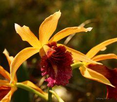 Orchideenausstellung auf der Insel Mainau