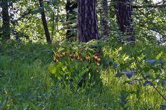 Orchideenbiotop für die Liebhaber, die Insel vor dem Baum